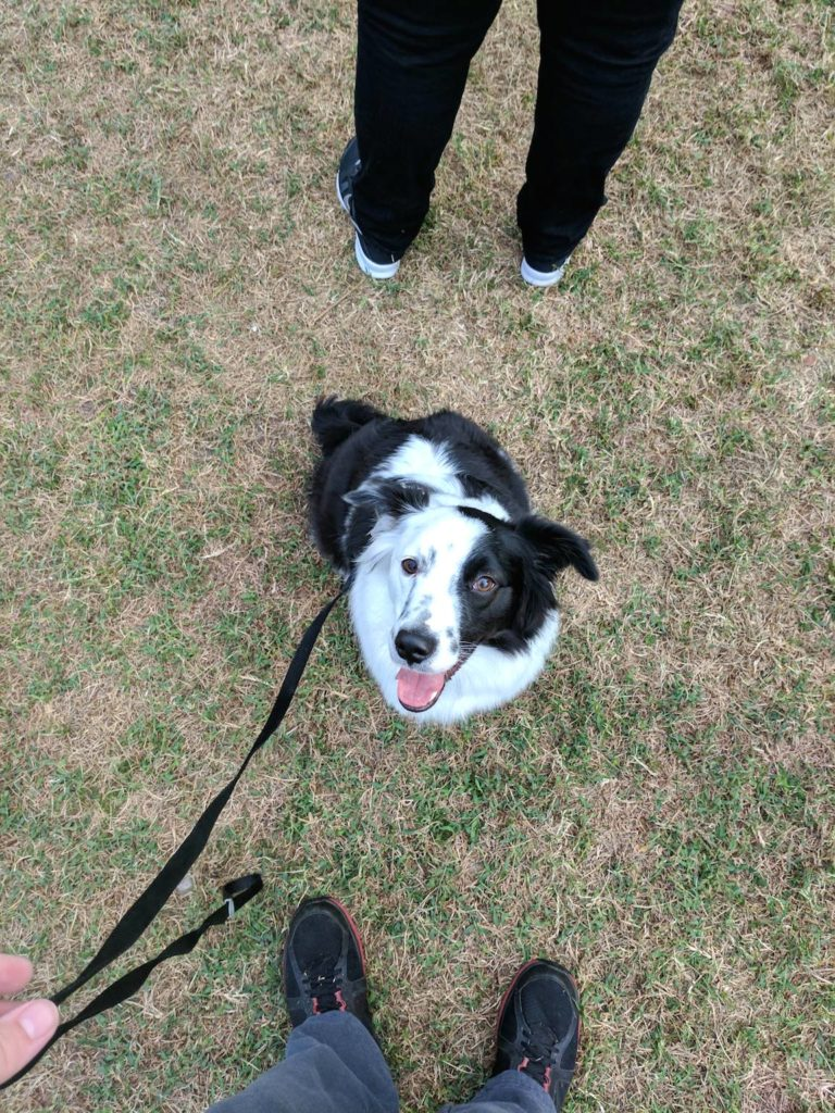 astra-austrailan-shepherd-lee-county-heart-walk